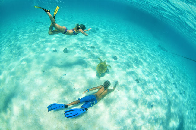Snorkel with turtles on kite cruise in the Grenadines